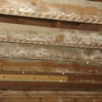 Severe secondary mould contamination of ceiling rafters
