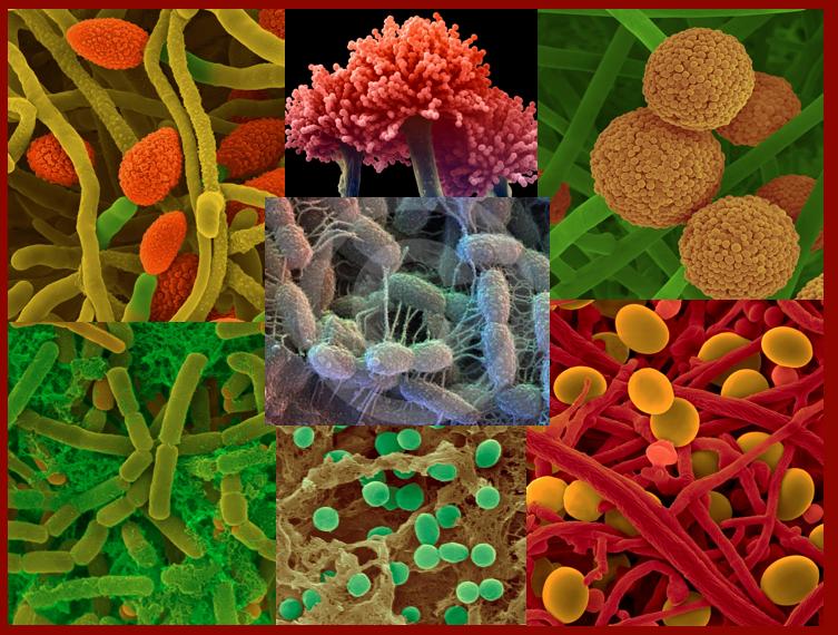 soil-microbes