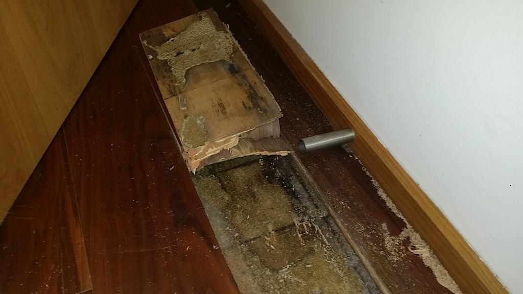 C47,s6,rooting floor, bedroom