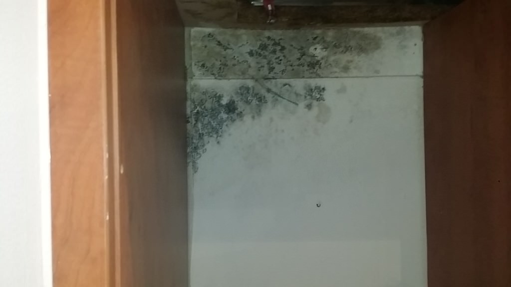mould in kitchen