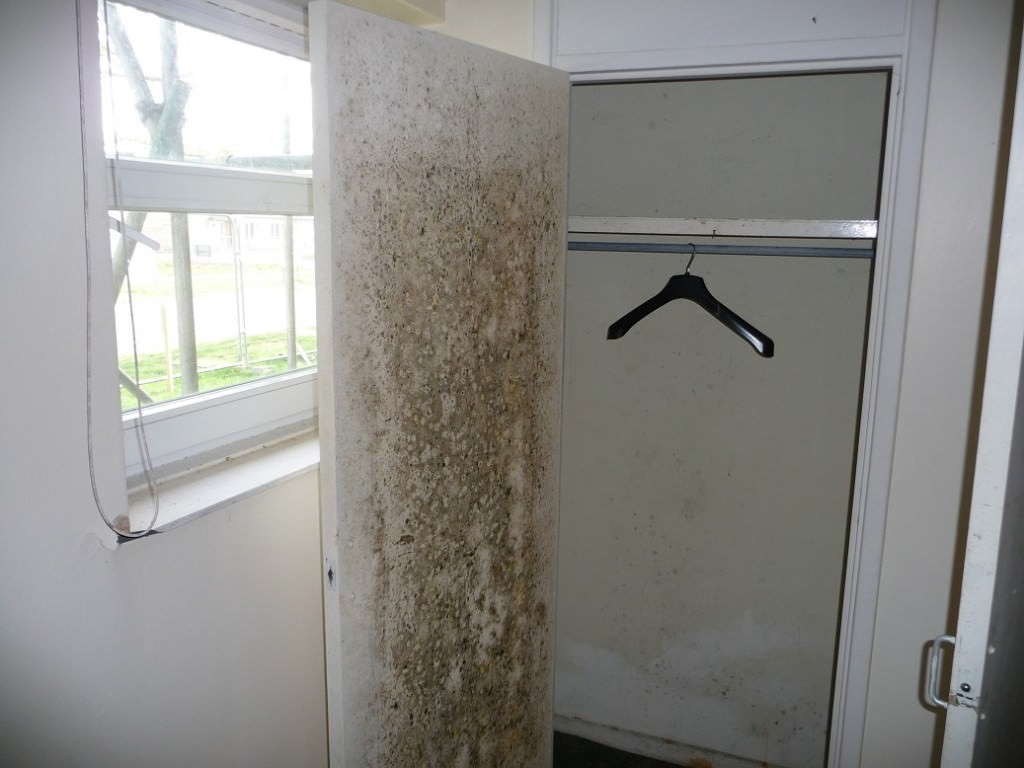 mould on cupboard door