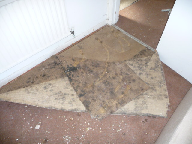 mould under carpet