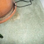 moth damage to wool carpet