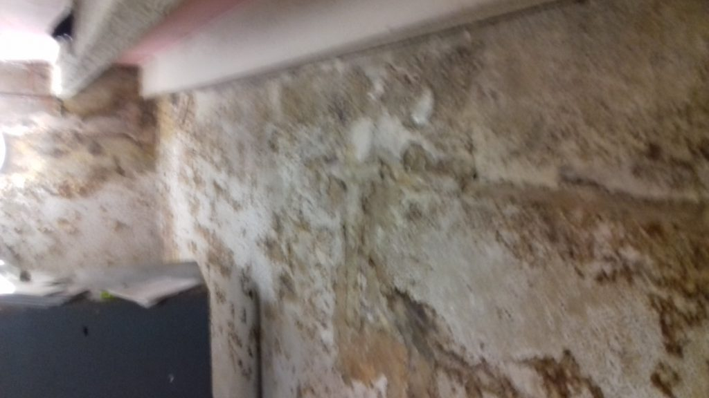 Damp in basement, damage to wall paint