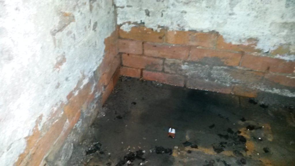 mould in basement