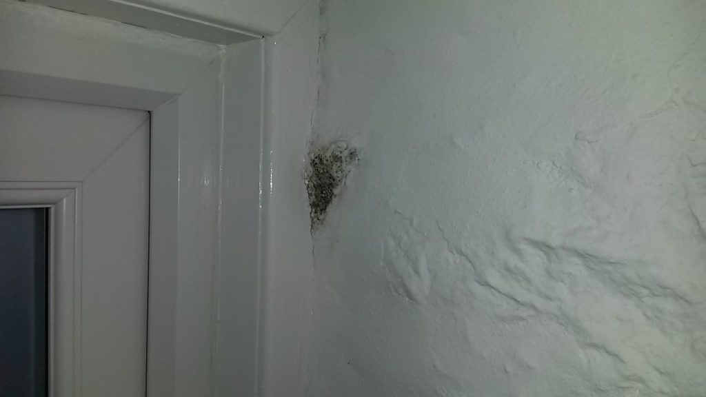 Damp and mould investigation
