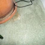moth damage to wool carpet