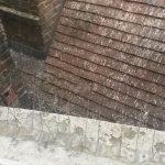 pigeon faeces contamination